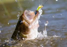 Cómo pescar róbalo